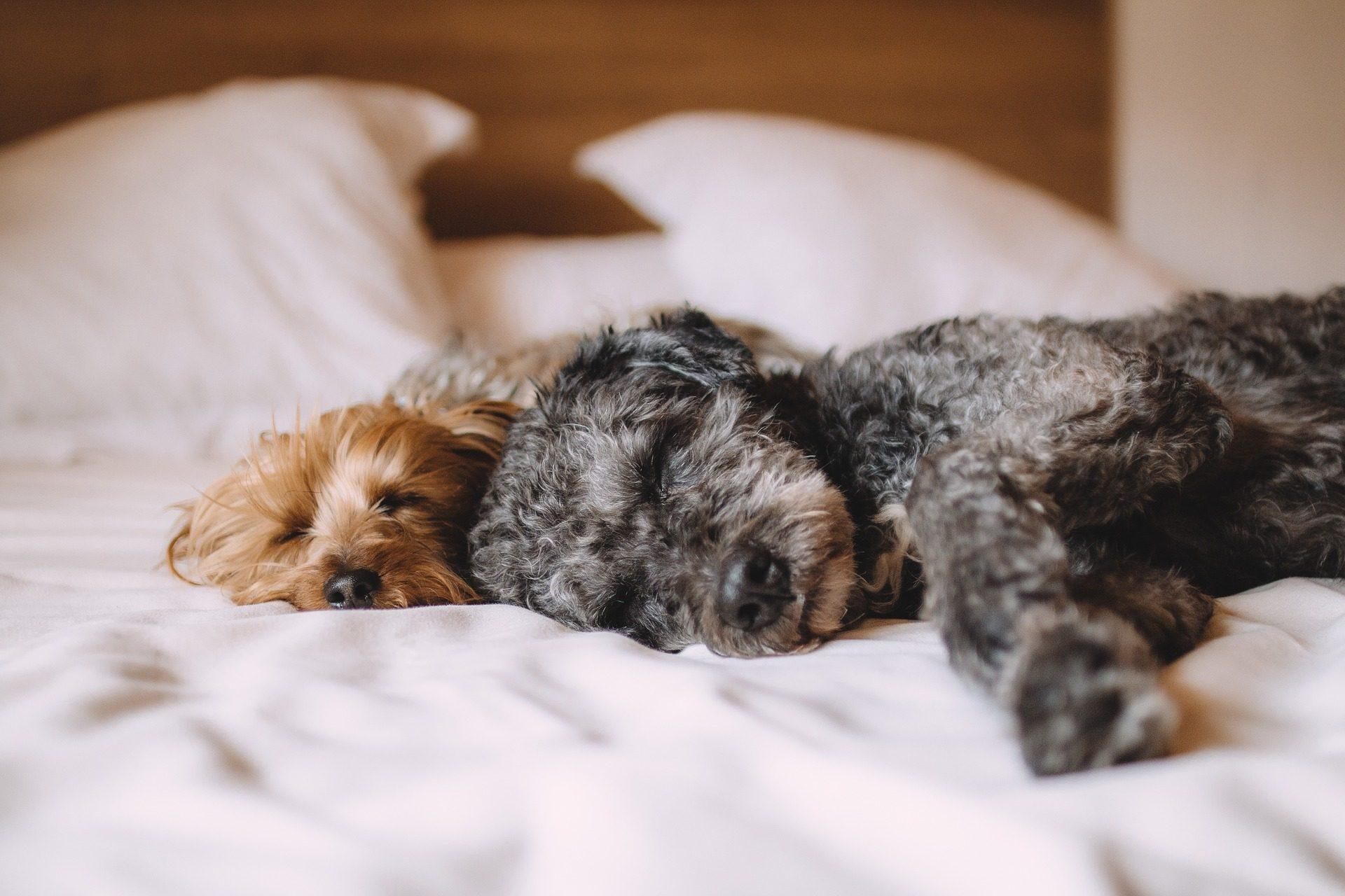 Image of pets cuddling on mattress